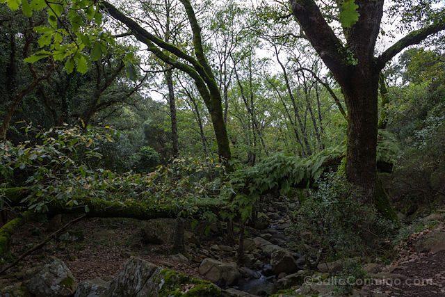 Un bosque de laurisilva en Tarifa, más motivos para la locura