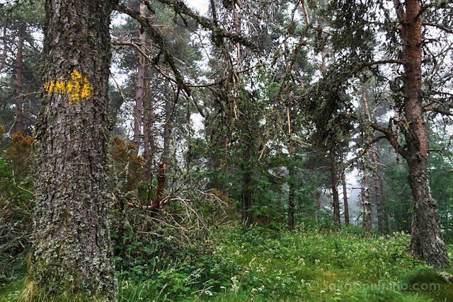 CaminoTrip Camino Bosque Niebla Flecha Amarilla