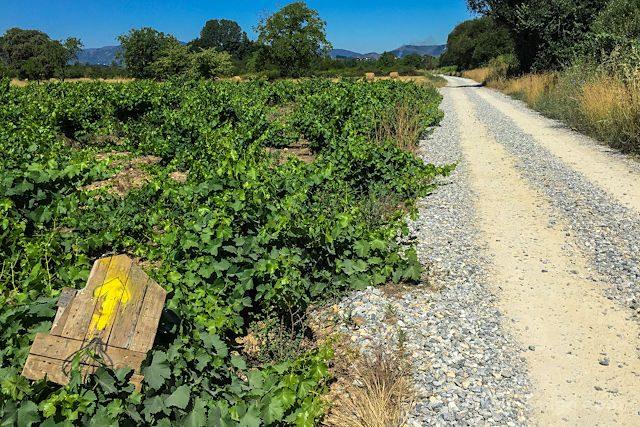 Camino de Santiago Camino Vides Flecha Amarilla