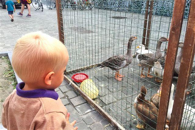 Belgica Flandes Gante Mercadillo Animales