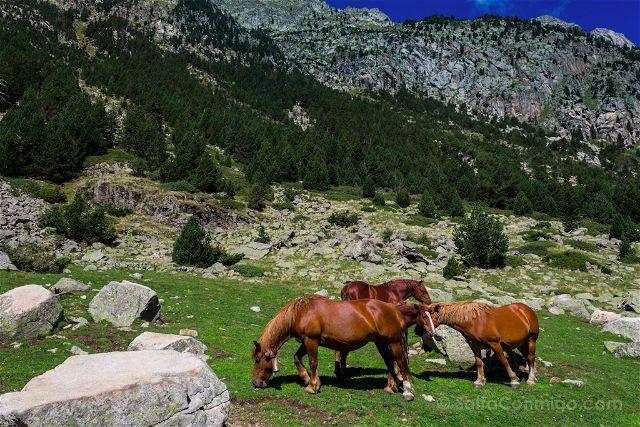Lleida Parque Nacional Aiguestortes Caballos