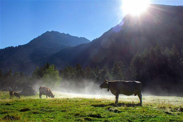 Lleida Parque Nacional Aiguestortes Niebla