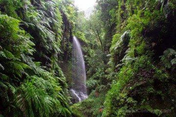 La Palma Bosque Tilos Cascada