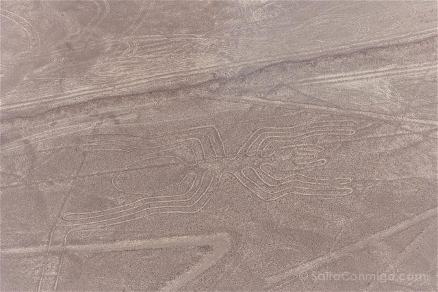 Peru Lineas Nazca Araña