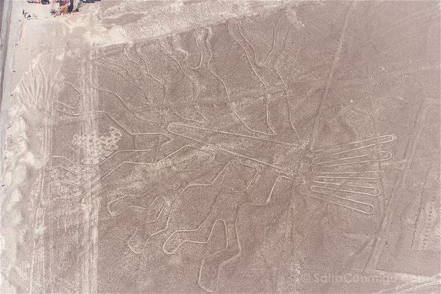Peru Lineas Nazca Arbol