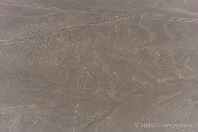 Peru Lineas Nazca Mono
