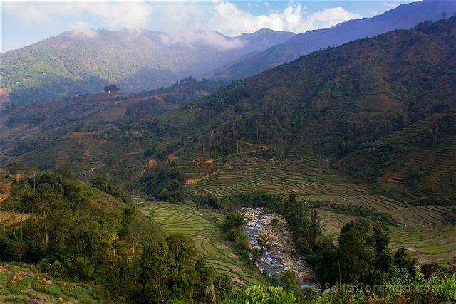 Vietnam Sapa Arrozales Terrazas