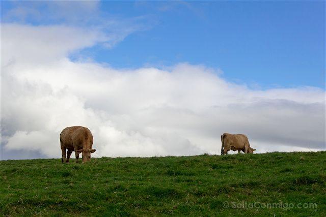 Irlanda Cliffs Acantilados Moher Vacs