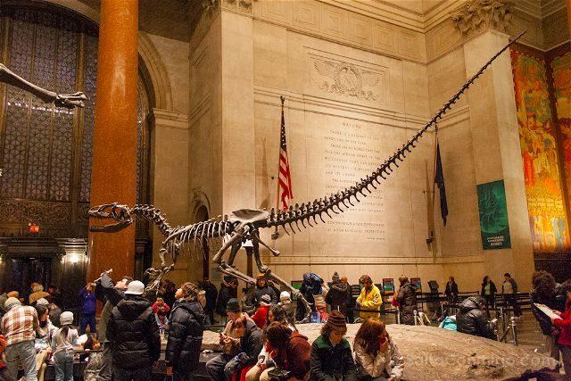 USA Nueva York Museo Historia Natural Dinosaurio