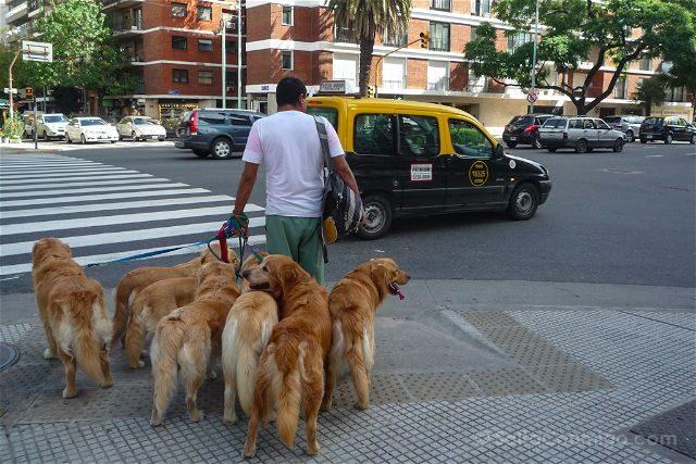 Argentina Buenos Aires Paseador Perros