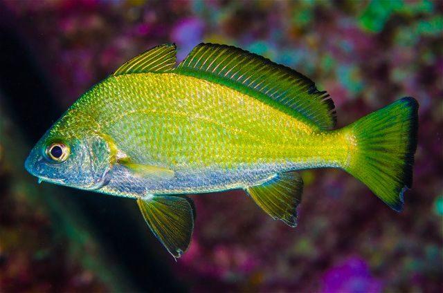Canarias concurso fotografia submarina pez
