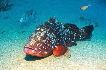 Canarias concurso fotografia submarina vida submarina