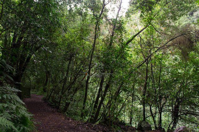 La Palma Ruta Senderismo Trekking Tilos Sendero