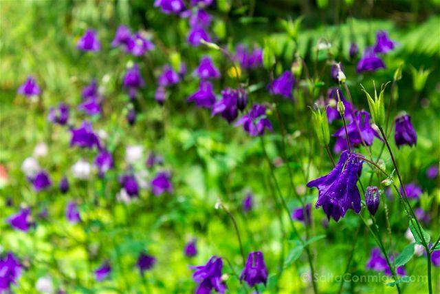 Asturias Gijon Jardin Botanico Atlantico Flores
