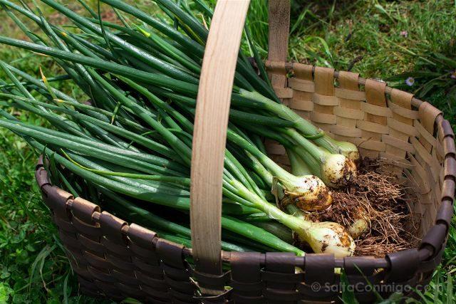 Asturias Gijon Sostenible Recoger Producto Local