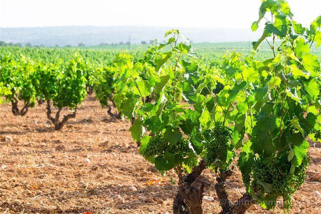 Valencia Toscana Valenciana Bodega Casa Frailes Vides