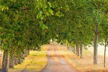 Comunidad Valenciana Toscana Camino Arbolado