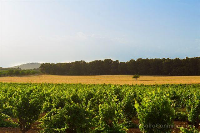 Comunidad Valenciana Toscana Campos Arbol