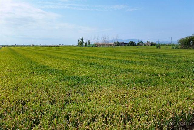 tarragona delta del ebro terres ebre arrozales