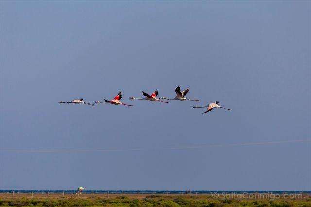 tarragona delta del ebro terres ebre parque natural flamencos