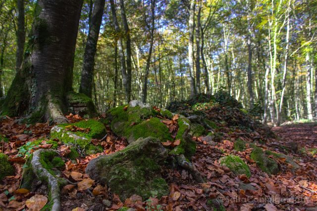 girona garrotxa parque natural zona volcanica fageda jorda hayedo hayas