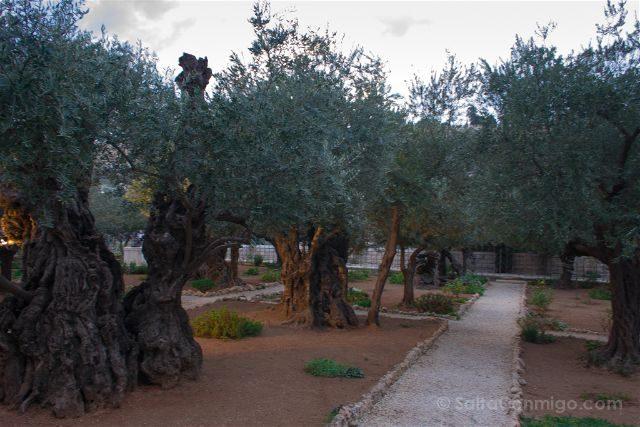 israel jerusalen monte de los olivos