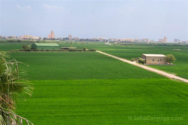 valencia albufera el palmar bon aire arrozales