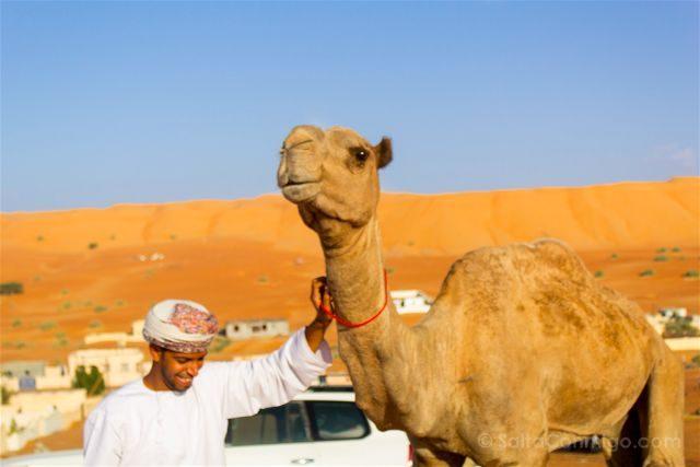 Oman Desierto Wahiba Sands Ramlat Camello Carreras