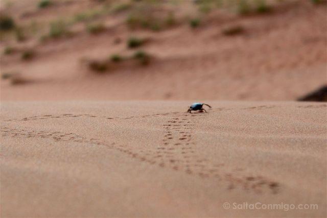Oman Desierto Wahiba Sands Ramlat Escarabajo