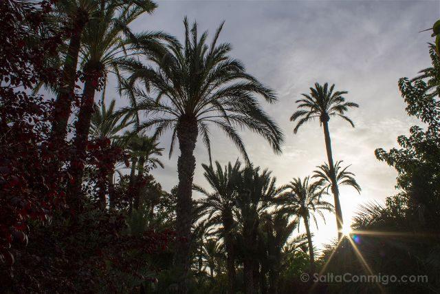 Alicante Elche Palmeral Parque Municipal Atardecer