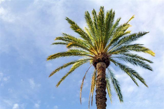 Alicante Elche Palmeral Parque Municipal Palmera