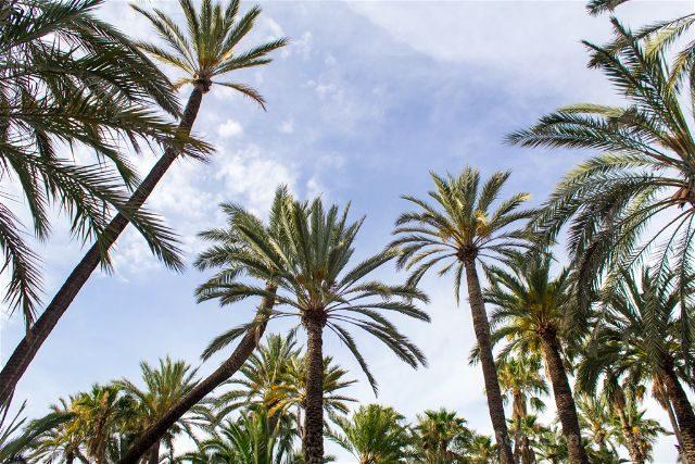 Alicante Elche Palmeral Parque Municipal