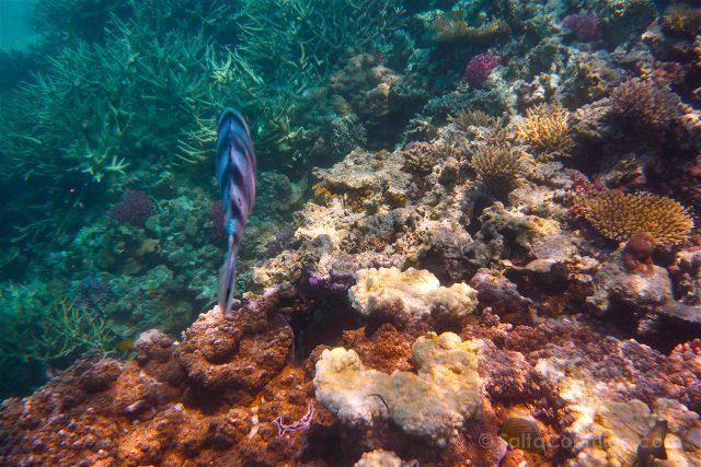 Australia Lady Musgrave Island Arrecife