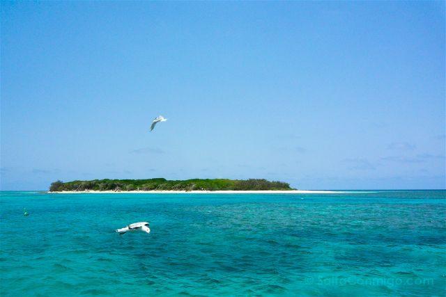 Australia Lady Musgrave Island Isla Completa
