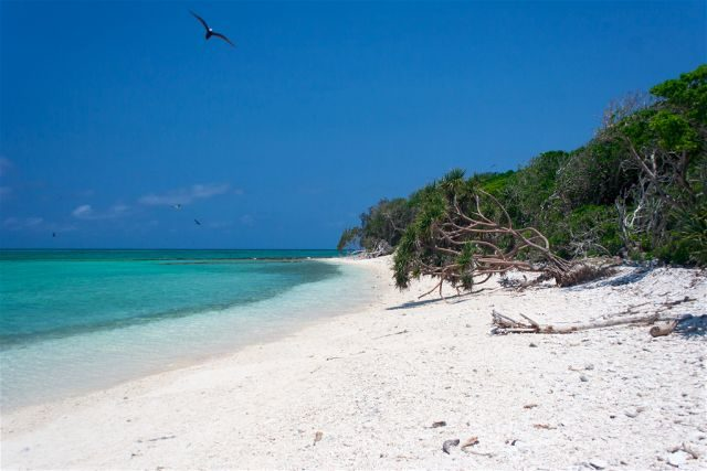 Australia Lady Musgrave Island Playa