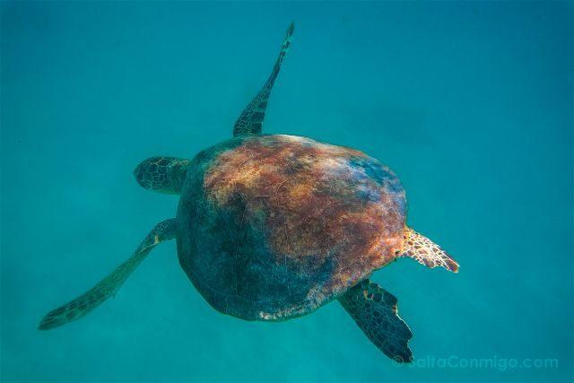 Australia Lady Musgrave Island Tortuga Snorkel