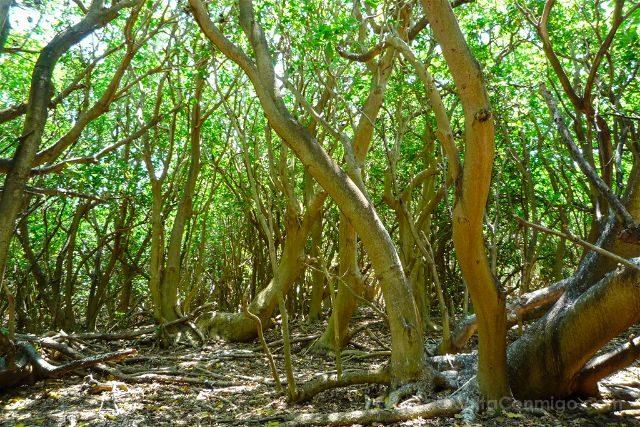 Australia Lady Musgrave Island Vegetacion