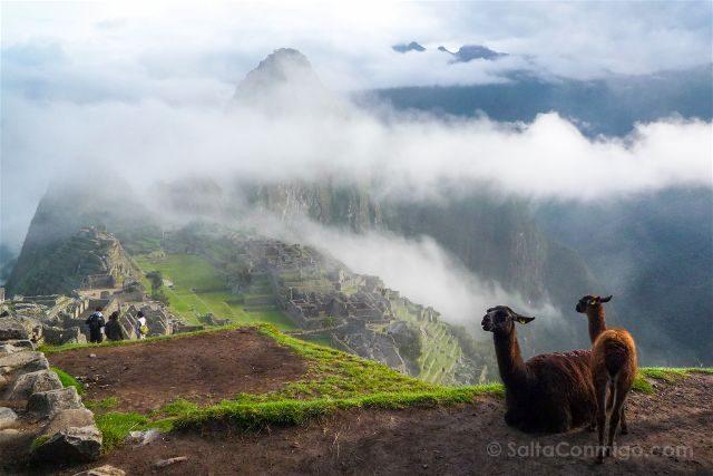 Peru Machu Picchu Niebla Vista Clasica Llamas