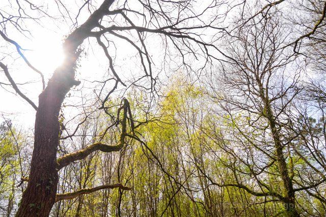 Francia Bretagne Bosque Broceliande