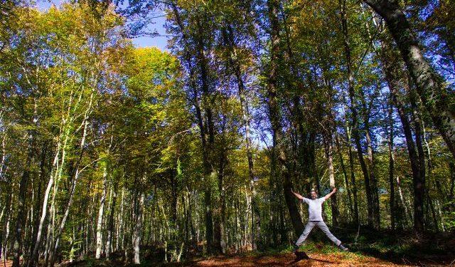 Girona Hayedo Fageda d'en Jorda Salto