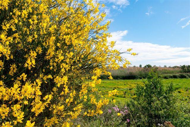 Catalunya Barcelona Delta Llobregat Flores