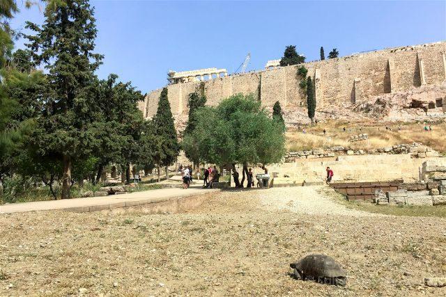 Grecia Atenas Acropolis Tortuga