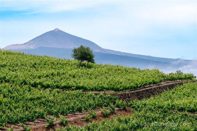 Islas Canarias Tenerife Bodegas Monje Vides Teide