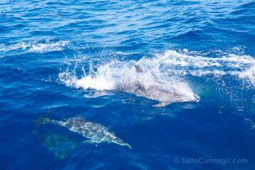 Islas Canarias Tenerife Observacion Cetaceos Delfines