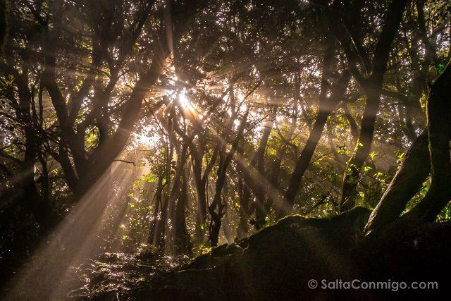 Islas Canarias Tenerife Parque Anaga Sendero Sentidos Luz