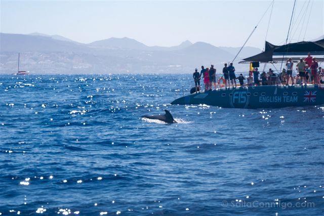 Islas Canarias Tenerife Avistamiento Cetaceos Ballena Piloto Barco