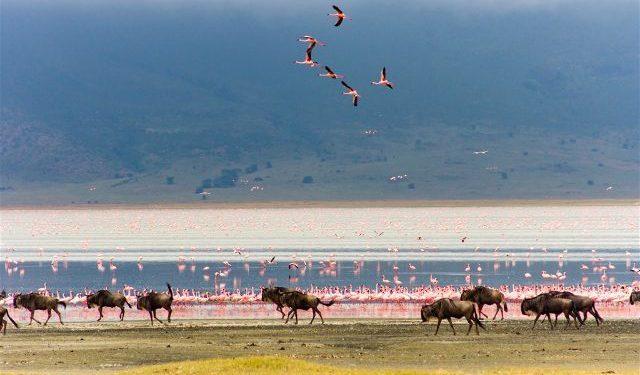 Tanzania Zona Conservacion Ngorongoro
