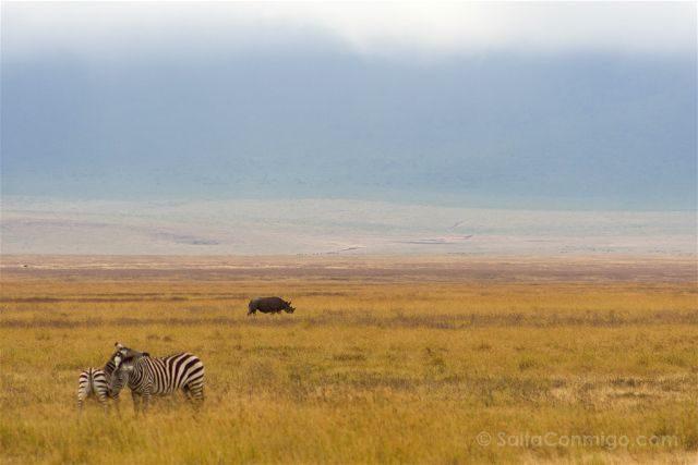 Tanzania Zona Conservacion Ngorongoro Rinoceronte