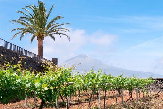 Islas Canarias Tenerife Teide Casa Vino Sauzal
