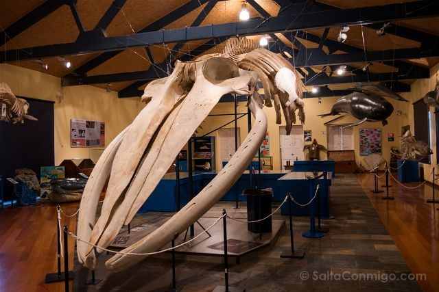 Galicia Ferrol Museo Historia Natural Ballena